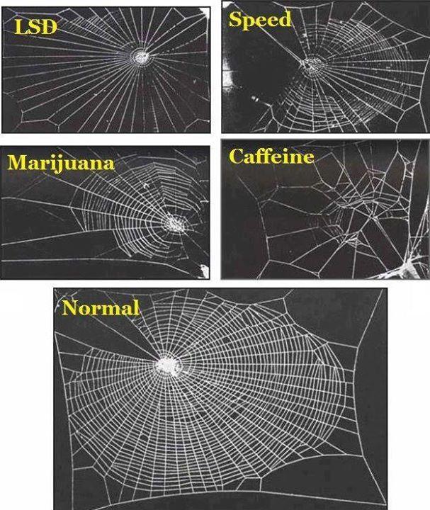 Cafeina y los descubrientos en la NASA. Medicina Integral Natural DR. Facundo Bitsch