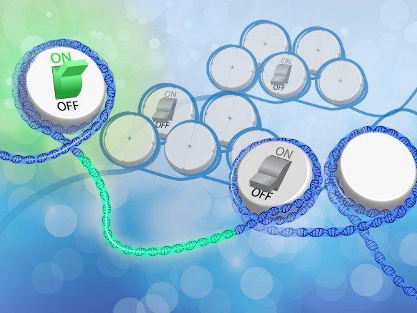 epigenetica prender y apgar genes segun estilo de vida doctor facundo bitsch medicina integral natural
