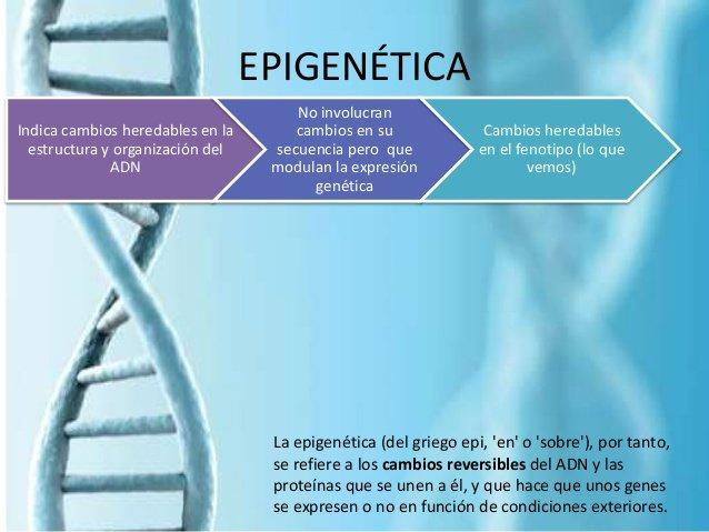 epigenetica y como afecta la salud prender o apagar genes segun el estilo de vida doctor facundo bitsch medicina integral natural